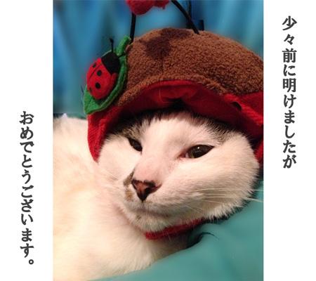 IMG_キュウ帽子